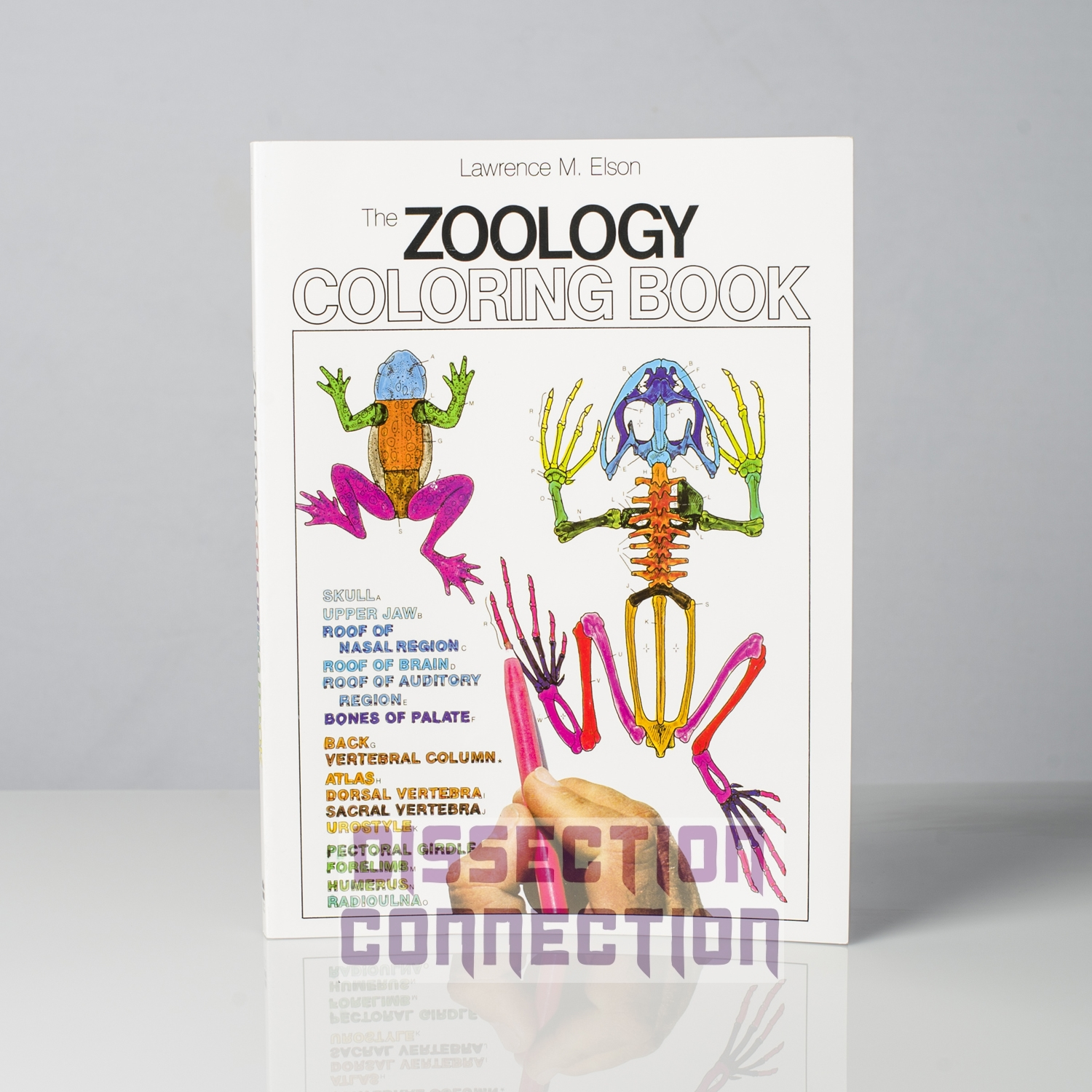 elsons zoology anatomy colouring book