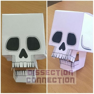papercraft skull made with free printable from skull-a-day