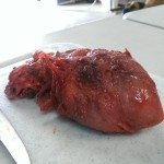 pig heart with unusual morphology
