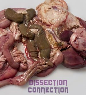galline pluck from dissection connection