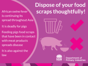 dangers of africa swine fever and how to prevent it biosecurity