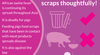 African Swine Fever risks genetic diversity of pig populations globally